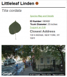 One of 682,515 tree addresses, photos and species